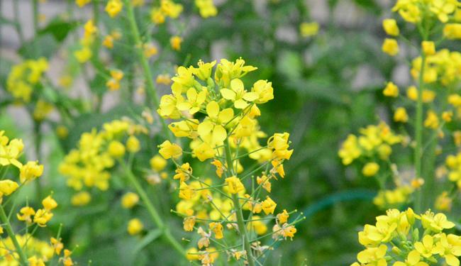 野菜たちの花々